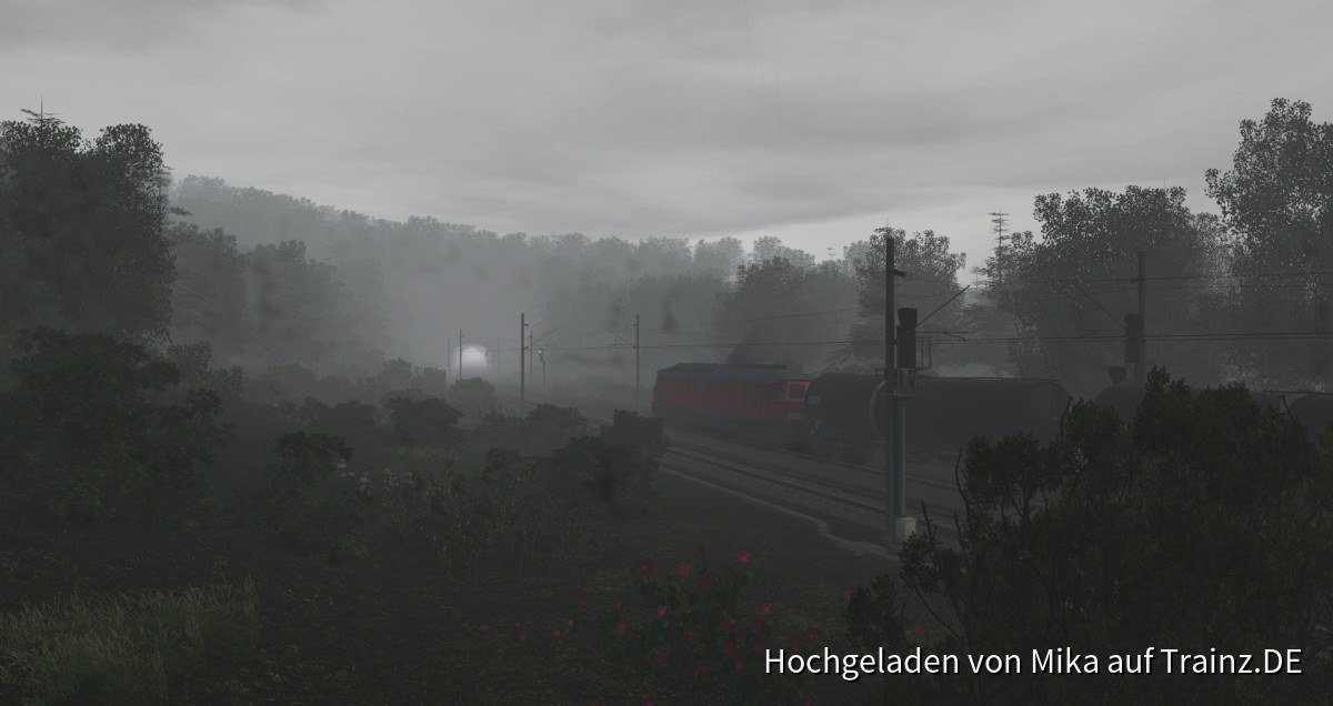 Ludmilla im Nebel